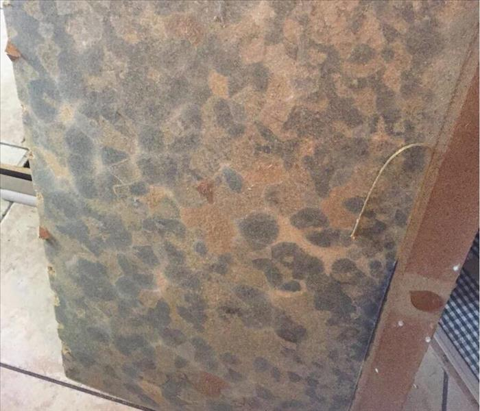 SERVPRO Customer's Extensive Mold Problem